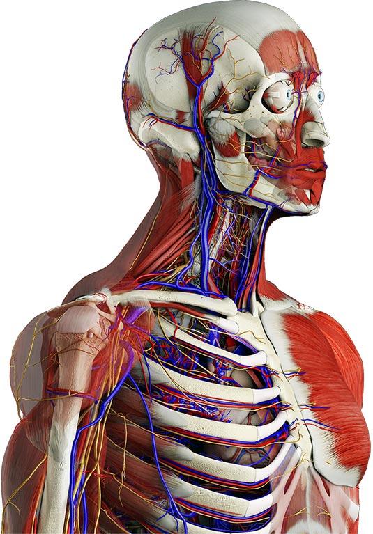 Yepyeni Bir Anatomi Uygulaması: Essential Anatomy