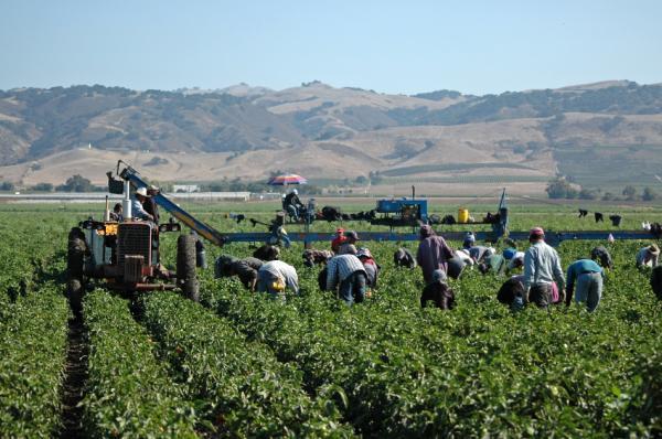 Kaliforniya, Çiftlik İşçileri İçin Mobil Eğitime Geçiyor