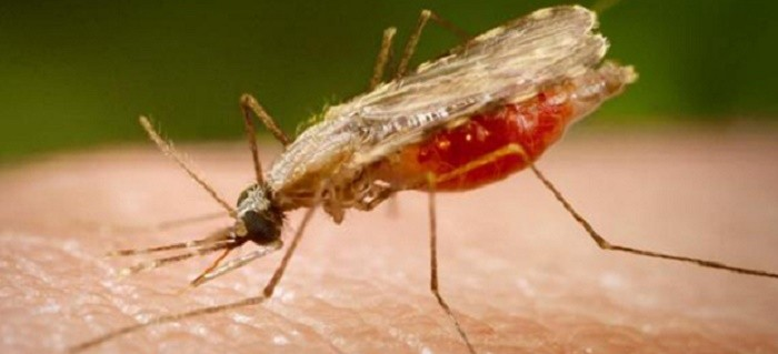 Büyük Veri Sayesinde Sıtma Tedavisinde Yeni Keşifler Yapıldı