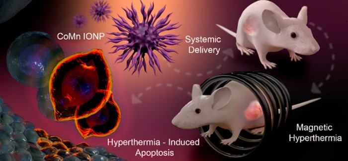 Manyetik Nanotanecikler, Tümörleri İmha Ediyor